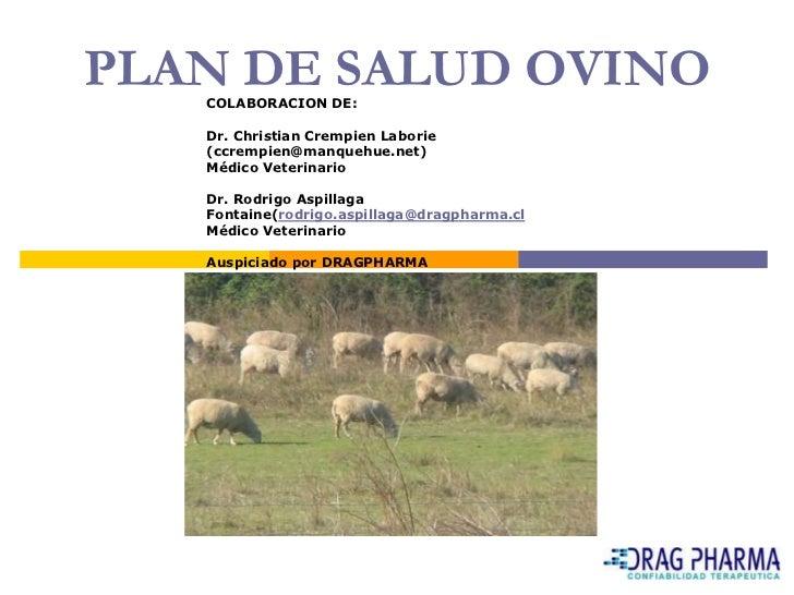 Principales enfermedades de los ovinos