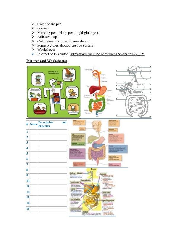 Digestive system worksheets for grade 4