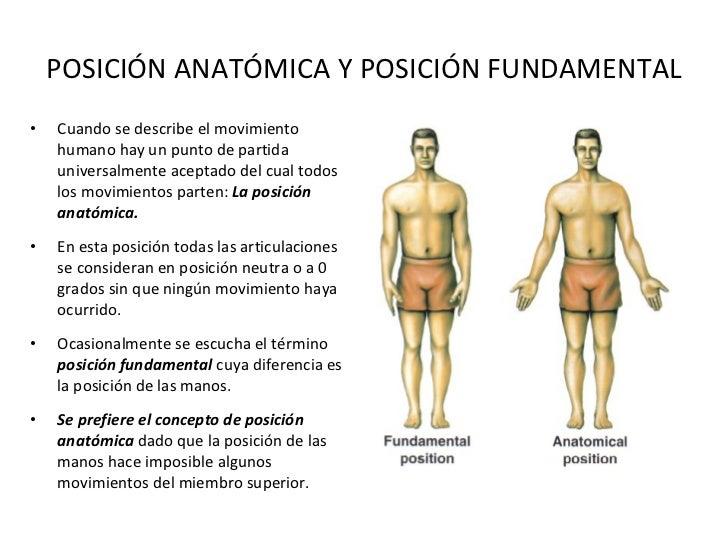 Moderno Martini Pdf Anatomía Humana Patrón - Anatomía de Las ...
