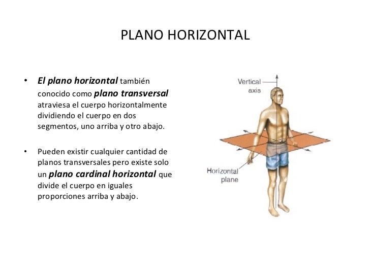 Dorable Anatomía Plano Transversal Elaboración - Anatomía de Las ...