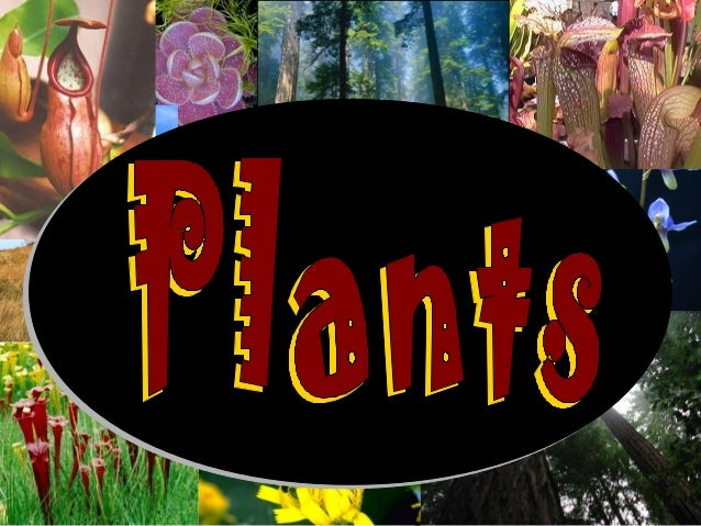 Vascular Plants and Nonvascular PlantsVascular Plants and Nonvascular PlantsVascular Plants have tubes to carry water& nut...