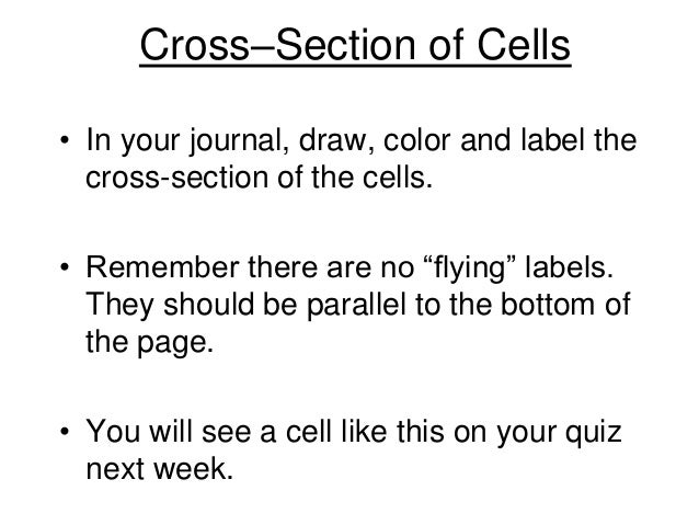 """Cross–Section of Cells • In your journal, draw, color and label the cross-section of the cells. • Remember there are no """"f..."""