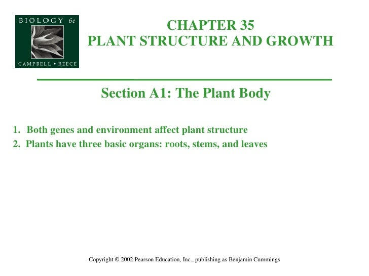 CHAPTER 35 PLANT STRUCTURE AND GROWTH Copyright © 2002 Pearson Education, Inc., publishing as Benjamin Cummings Section A1...