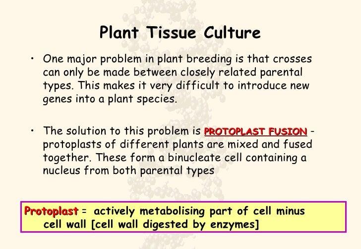 Plant  Culture