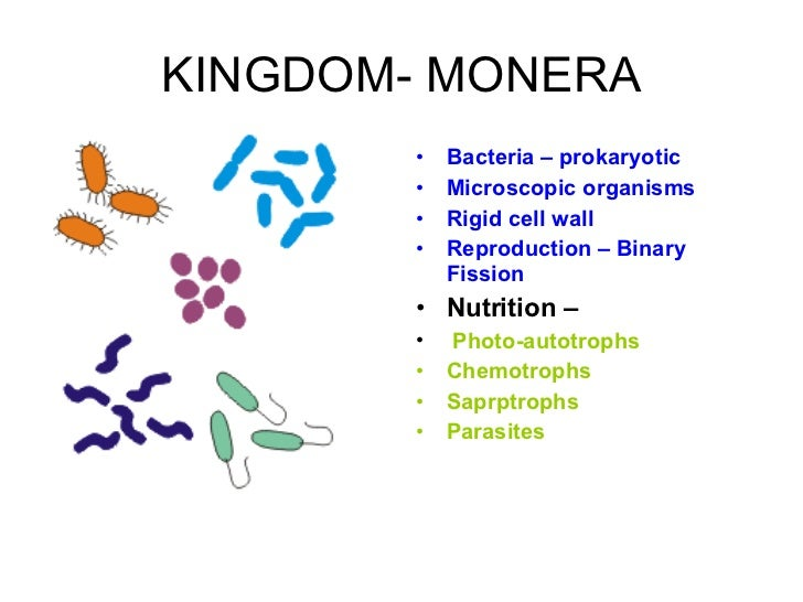 What are some examples of bacteria  Referencecom