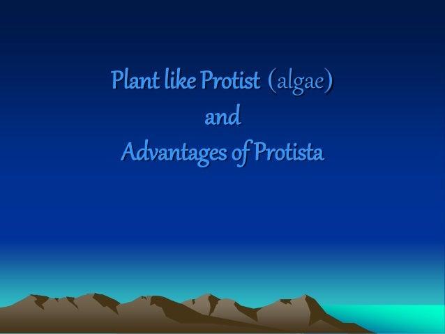 Plant like Protist (algae) and Advantages of Protista