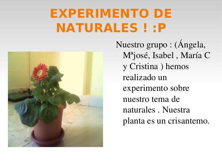 EXPERIMENTO DE NATURALES ! :P <ul><li>Nuestro grupo : (Ángela, Mªjosé, Isabel , María C y Cristina ) hemos realizado un ex...