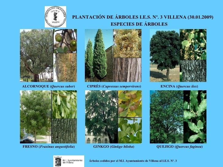 Plantación de árboles N.º 3 - Villena (30.01.2009)