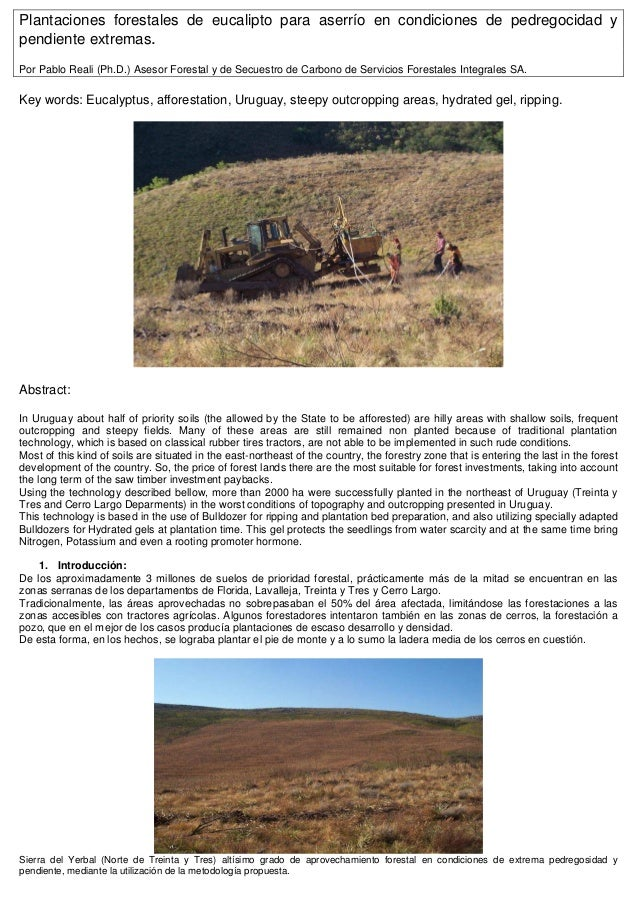 Plantaciones forestales de eucalipto para aserrío en condiciones de pedregocidad ypendiente extremas.Por Pablo Reali (Ph.D...