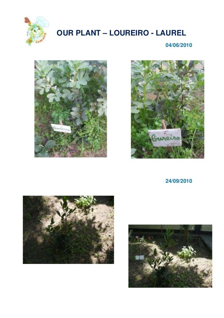 -308610-87630<br />         OUR PLANT – LOUREIRO - LAUREL<br />04/06/2010<br />819152495553339465249555<br />24/09/2010<br...