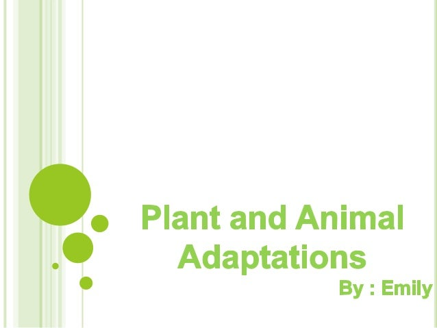 ADAPTATIONS   Adaptations   are the characteristics    of an animal or a plant that improve    its chances of surviving w...