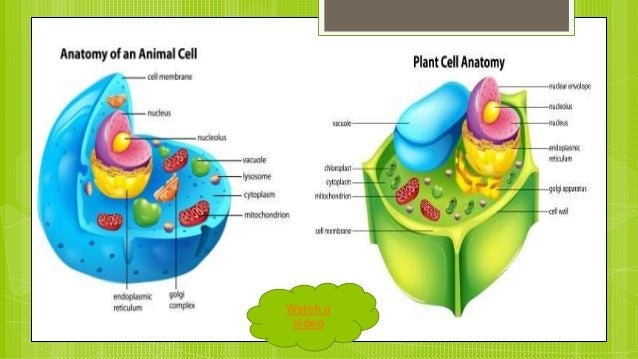 difference between plant and animal cells pdf