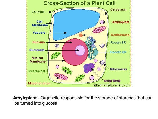 animal cell parts 7th grade