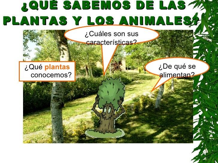¿QUÉ SABEMOS DE LAS PLANTAS Y LOS ANIMALES?   <ul><li>¿Qué  plantas  conocemos? </li></ul>¿De qué se alimentan? ¿Cuáles so...