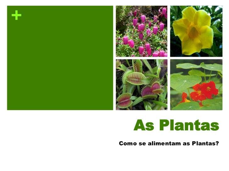 +             As Plantas     Como se alimentam as Plantas?