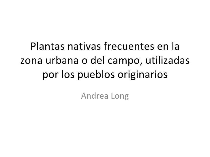 Plantas nativas frecuentes en la zona urbana o del campo, utilizadas por los pueblos originarios Andrea Long