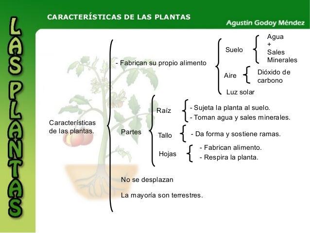Plantas for Tipos de arboles y caracteristicas