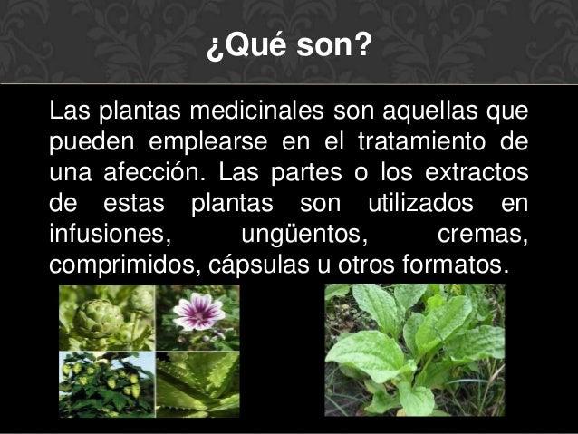 Plantas medicinales - Cosas sobre las plantas ...
