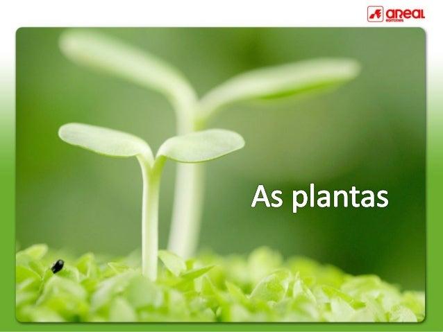 Uma planta completa é formada por raiz, caule, folhas, flor e fruto.