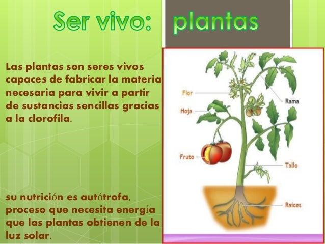 caracteristicas de las plantas y piedras