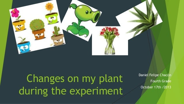 Changes on my plant during the experiment  Daniel Felipe Chacón Fourth Grade  October 17th /2013