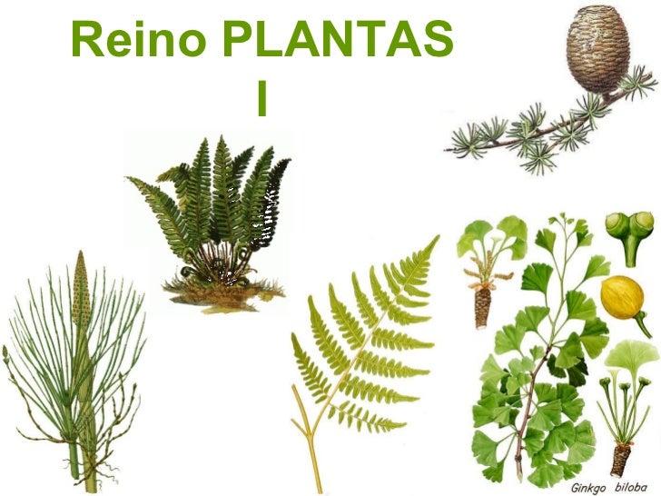 Reino PLANTAS I
