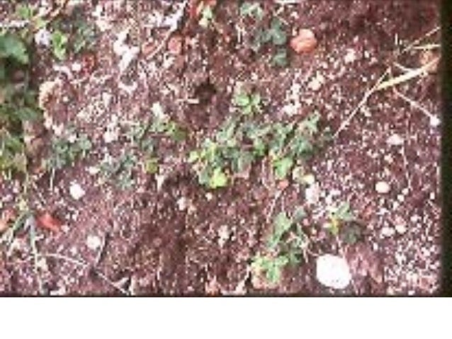 PLANTAS MEDICINALES  Y  DESINTOXICACION