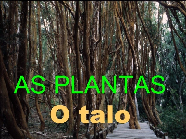 AS PLANTAS O talo