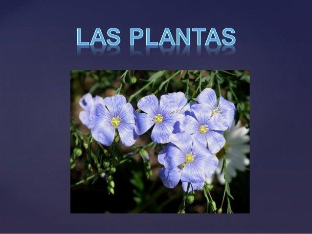 Las plantas más conocidas en este grupo son las algas, los musgos y los helechos, fueron los primeros vegetales en existir...
