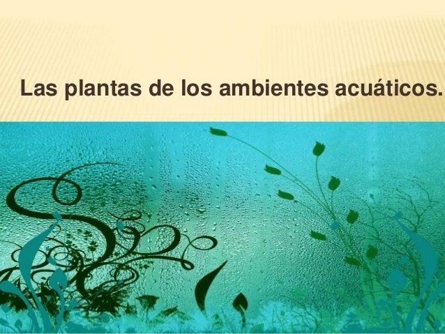Las plantas de los ambientes acuáticos.
