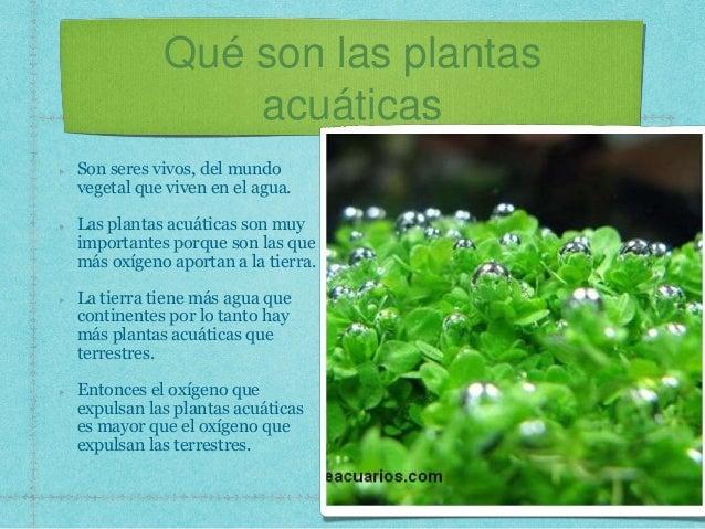 Plantas acuaticas for Arboles con sus nombres y caracteristicas
