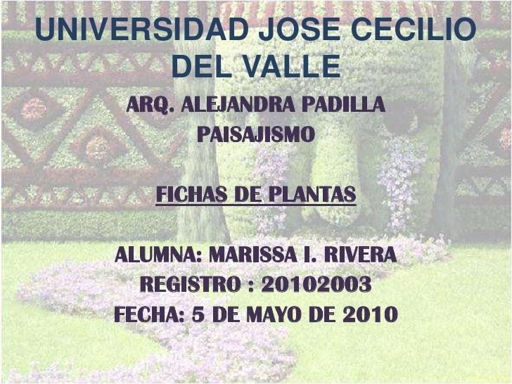 UNIVERSIDAD JOSE CECILIO DEL VALLE<br />ARQ. ALEJANDRA PADILLA<br />PAISAJISMO<br />FICHAS DE PLANTAS <br />ALUMNA: MARISS...