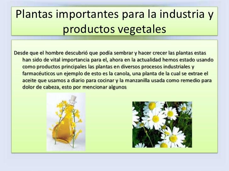 Plantas de importancia economica