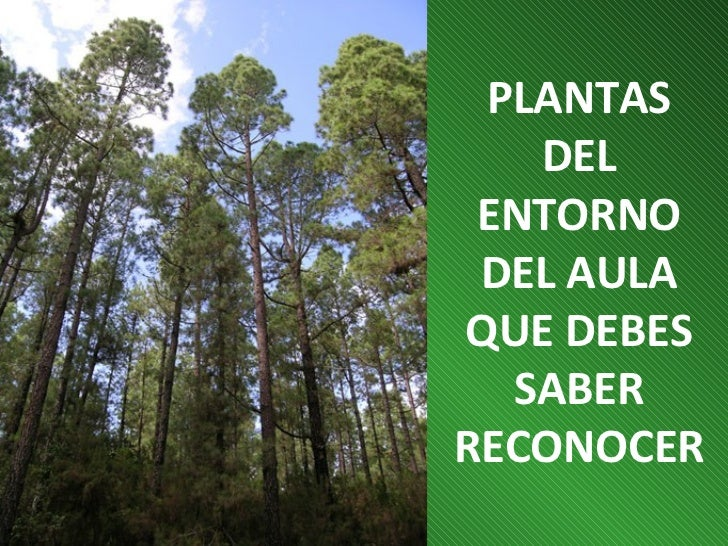 PLANTAS   DEL ENTORNO DEL AULAQUE DEBES  SABERRECONOCER
