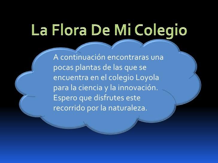 La Flora De Mi Colegio<br />A continuación encontraras una pocas plantas de las que se encuentra en el colegio Loyola para...