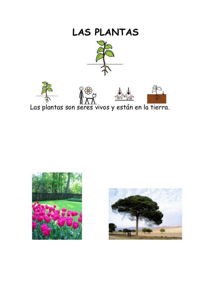 Plantas fichas for Todas las plantas son ornamentales