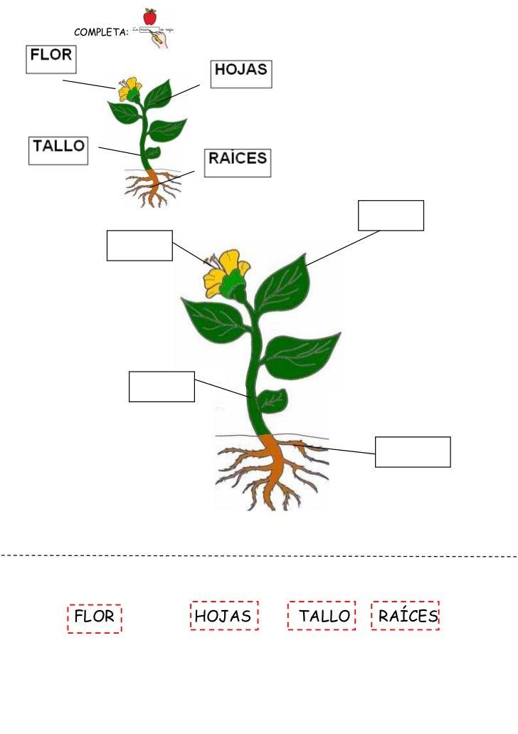 Plantas fichas - Fichas de plantas para ninos ...