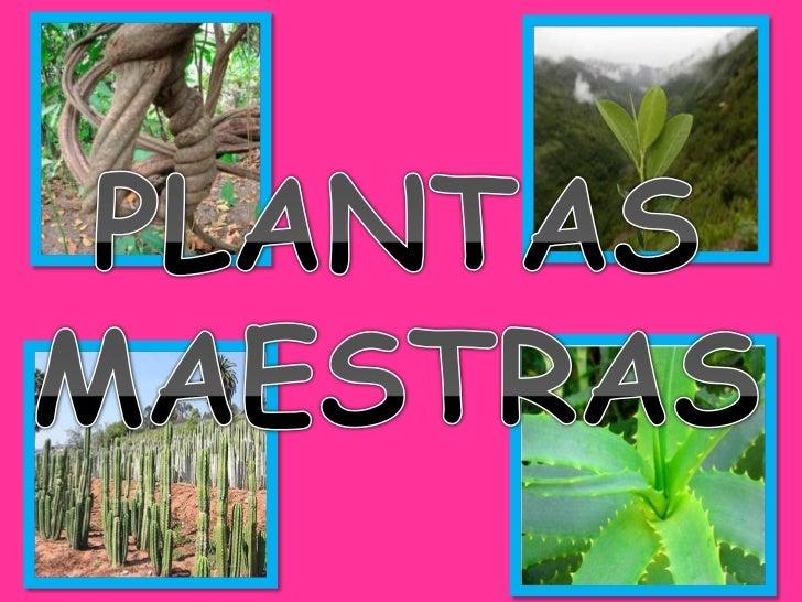 PLANTAS MAESTRAS DE USO EN EL PERÚ