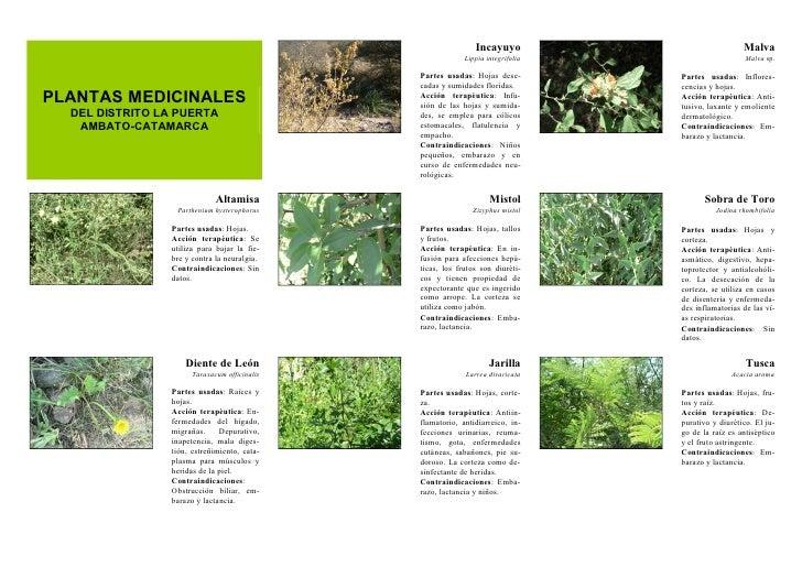 Plantas medicinales for Produccion de plantas ornamentales pdf