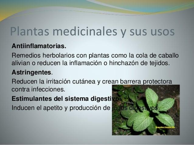 Plantas medicinales for Marmol caracteristicas y usos