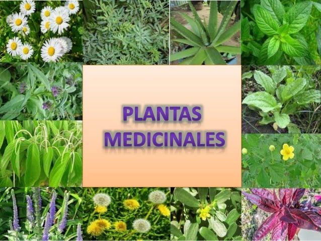 Plantas medicinales por Verónica Tigse y Jacqueline Jácome