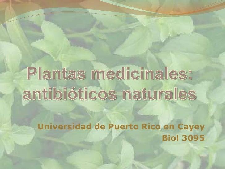 Universidad de Puerto Rico en Cayey                          Biol 3095