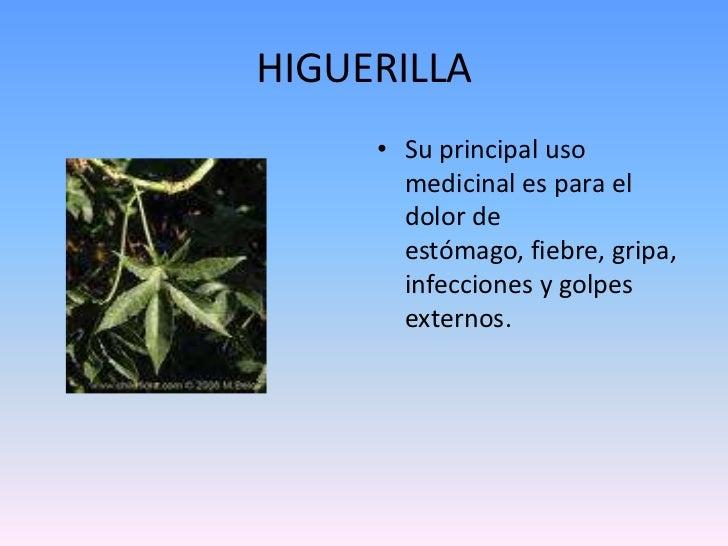 Baños Plantas Medicinales:Plantas medicinales del choco