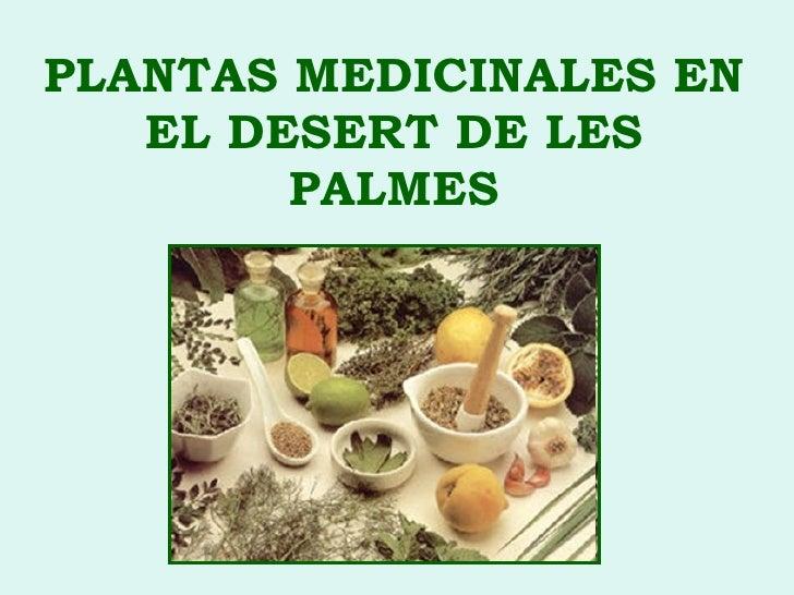 Plantas medicinales en el desert de les palmes
