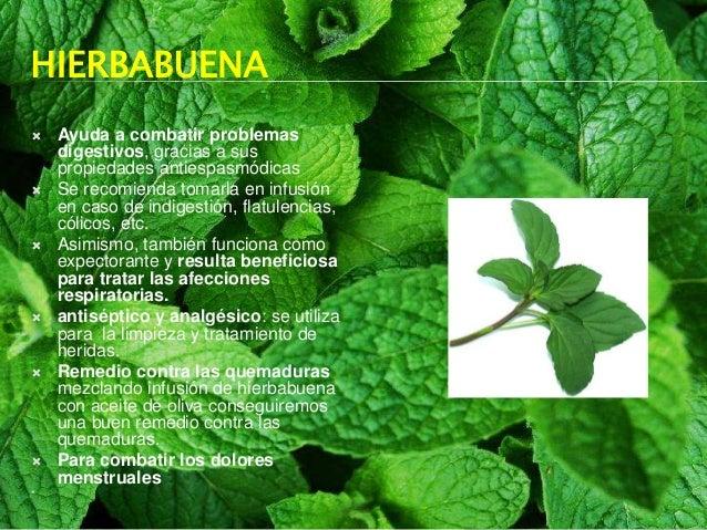 Antropolog a m dica plantas medicinales for Para q sirven las plantas ornamentales