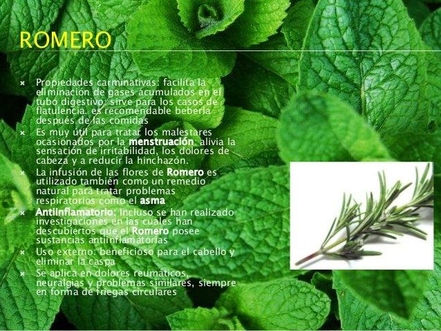 Plantas medicinales tradicionales for 10 plantas ornamentales y para que sirven