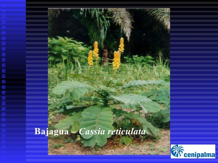 Plantas Nectariferas