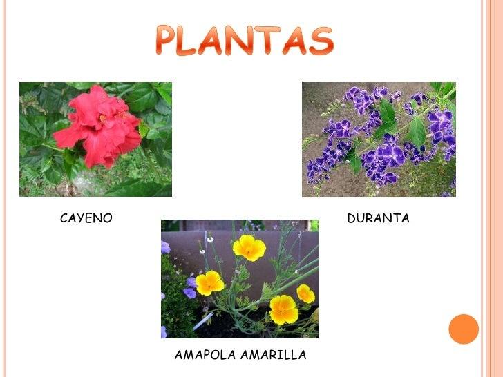 Plantas ornamentales for Que son la plantas ornamentales