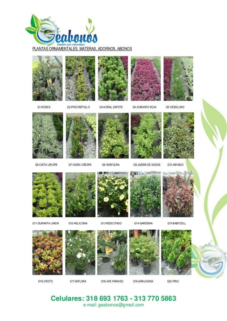 Plantas ornamentales otros for 2 plantas ornamentales