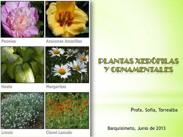 plantas ornamentales y xerofilas For5 Nombres De Plantas Ornamentales